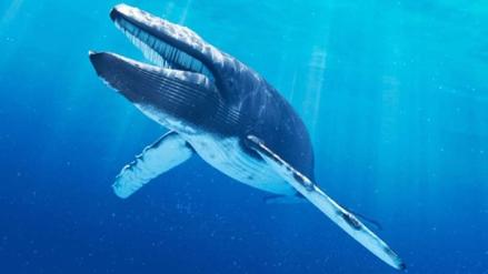 ¿Por qué la ballena azul es tan grande? Científicos resuelven el misterio