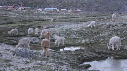Bajas temperaturas aquejan a regiones sureñas del país