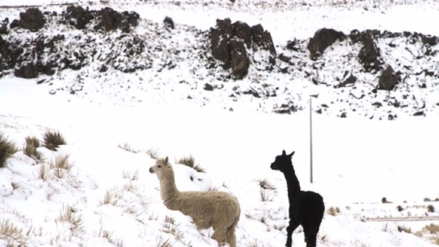 La temperatura en un centro poblado de Tacna llegó a los -17,4° C