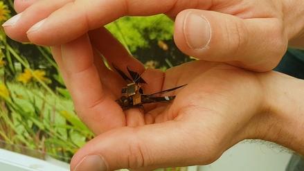 Esta libélula-cyborg es uno de los drones más pequeños del mundo