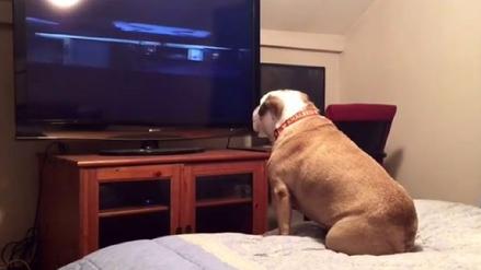 Youtube   Bulldog se vuelve viral ladrándole a una película de terror