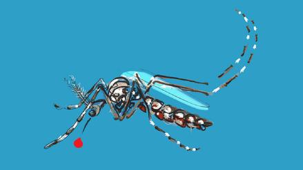 Radiografía del Aedes aegypti, causante del zika, dengue y chikungunya