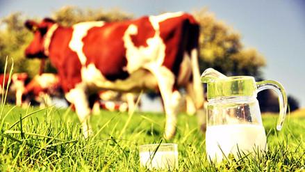 Mapa | Aquí puedes comprar leche fresca en Lima