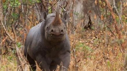 Un rinoceronte mató a un científico húngaro en Ruanda