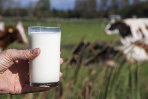 Mira cuáles son las 15 marcas de leche evaporada que no son de vaca