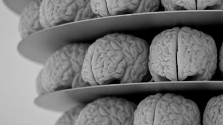 Nuestro cerebro funciona en 11 dimensiones