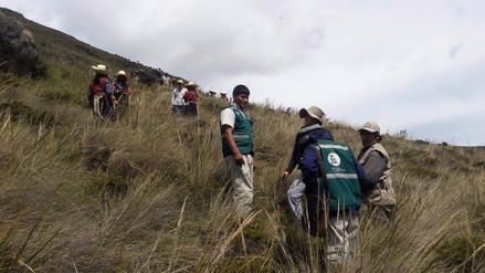 Instalan más de 30 mil plantones de especies nativas en Inkawasi