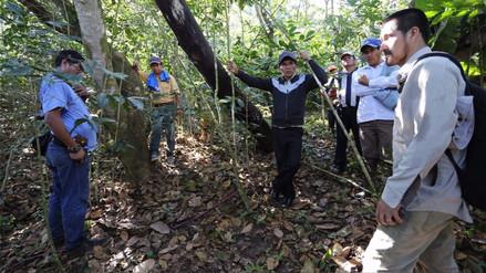 Advierten presencia de osos de anteojos en caserío de Kañaris