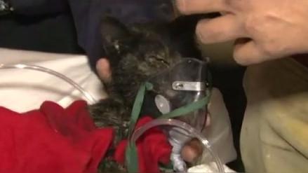 Bomberos rescatan otro gato que sobrevivió al incendio en Las Malvinas