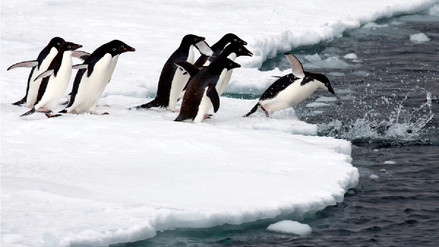 La cuarta parte de la Antártida desaparecería en el 2100