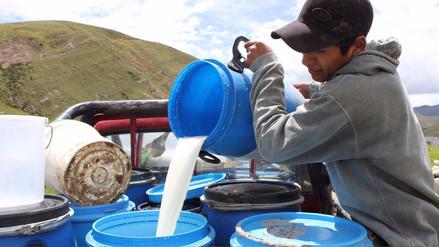 Minagri: Déficit en producción de leche se revertiría si el precio al ganadero mejorase