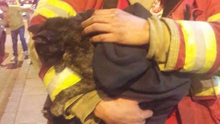 Al menos 30 animales murieron en el incendio de Las Malvinas
