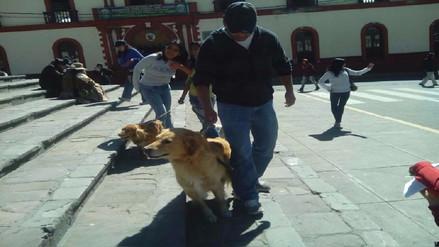 Realizan campaña de vacunación antirrábica en Puno