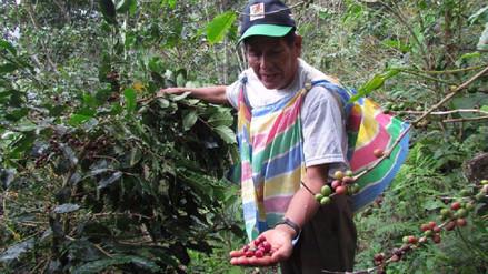 Puno y Bolivia conformaron mesa técnica para mejorar calidad del café