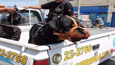 Chiclayo: ponen en marcha unidad canina para controlar a ambulantes