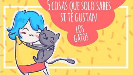 5 cosas que sabes si te gustan los gatos