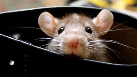 Video | Así se expande la enfermedad del cáncer en el cuerpo de un ratón