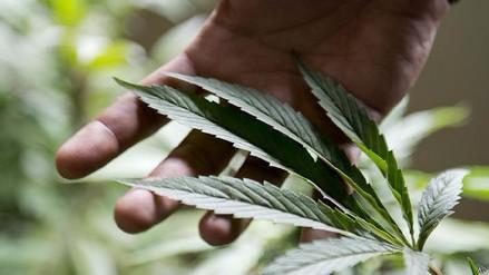 ¿Cómo logró Uruguay legalizar la marihuana?