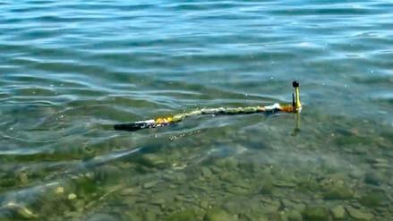 Este robot-anguila evalúa la contaminación de las aguas en tiempo real