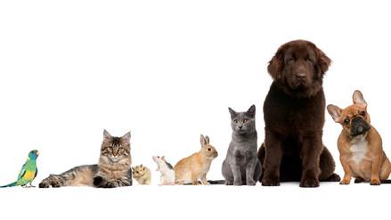Está en tus manos prevenir las enfermedades que causan las mascotas