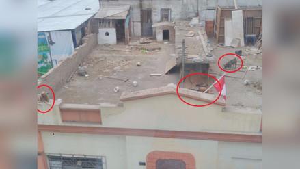 Más de diez perros viven encerrados en el techo de una vivienda en Lima