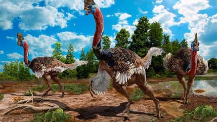 Hallada en China una nueva especie de dinosaurio de cuello largo y con cresta