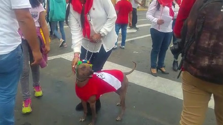 Mascotas se vistieron de rojo y blanco por Fiestas Patrias