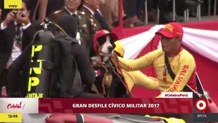 Los canes de PPK también desfilaron por la avenida Brasil