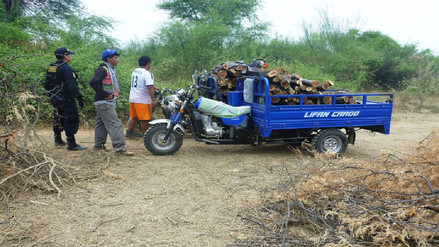 Decomisan leña de zapote en bosque seco de Paita