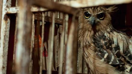 La saga de Harry Potter habría aumentado el tráfico ilegal de búhos en Indonesia, según estudio