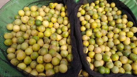 Precio del limón sigue subiendo en mercados de Lambayeque