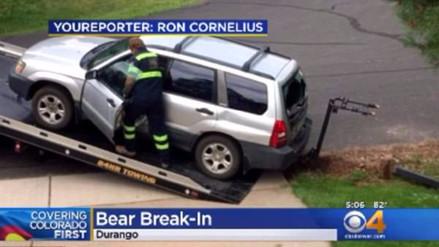 Un oso robó un SUV, lo chocó contra un buzón y defecó en su interior