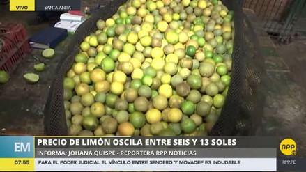 El limón 'pavita', una alternativa económica al desabastecimiento