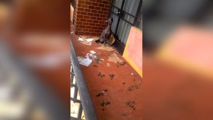 Vecinos denuncian maltrato animal en Villa María del Triunfo