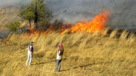 Ocho hectáreas de terrenos dañados tras incendio forestal