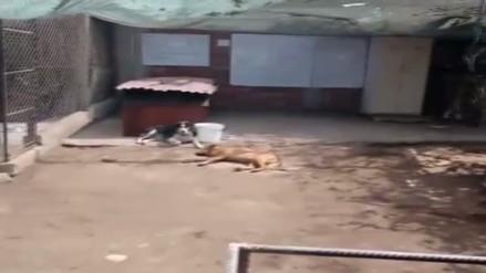 Perros aparecen muertos en el interior de la Universidad Nacional Agraria de La Molina