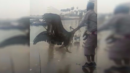 Ancón: Maltrato animal causa indignación a ciudadanos que visitaron muelle