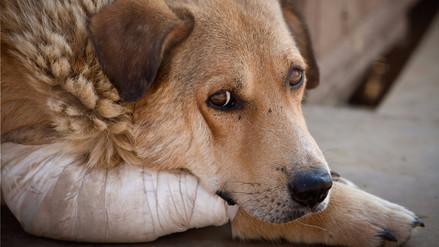 Reportaje | La ley no alcanza para proteger a los animales doméstico del maltrato