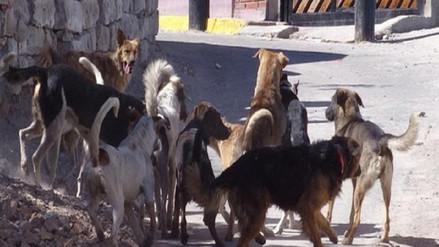 Más de mil 800 perros cuentan con DNI en distrito de Wanchaq