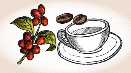 Infografía | Día del café peruano