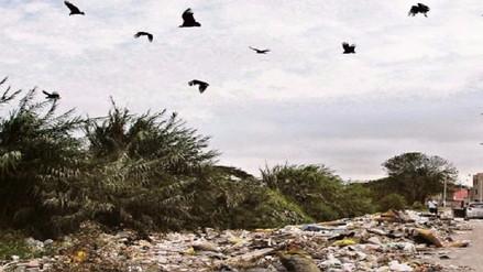 SERFOR evalúa autorización para iniciar caza sanitaria de gallinazos