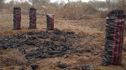 De enero a la fecha han detenido a 165 personas por delitos ambientales