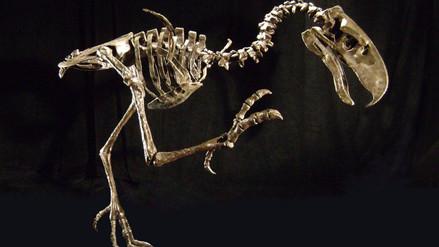 Hallan fósiles de aves carnívoras de 3,5 millones de años en Argentina