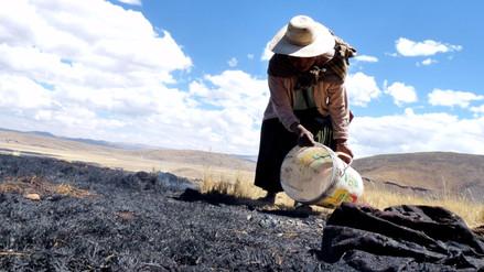 Putina: más de 300 hectáreas de pastizales arrasados por incendio