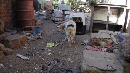 Rescatan a 25 perros abandonados en vivienda de Alto Selva Alegre