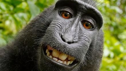 La batalla legal por el selfie del mono terminó con un acuerdo entre las partes