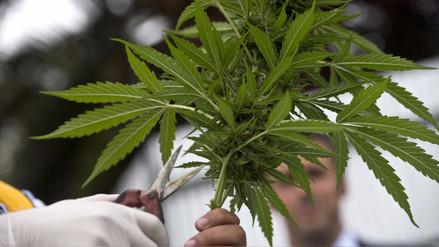 La Comisión de Defensa aprobó proyecto sobre uso de la marihuana con fines medicinales