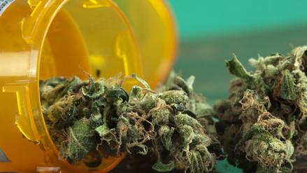 Colegio Médico: El riesgo del cannabis medicinal es escaso y el beneficio es alto