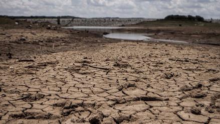 La sexta extinción masiva ocurrirá a partir de 2100, según científicos del MIT