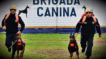 Brigadas de rescatistas y canes listos para actuar en caso de terremoto
